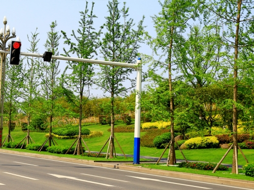 蜀泸大道四期景观绿化提升工程