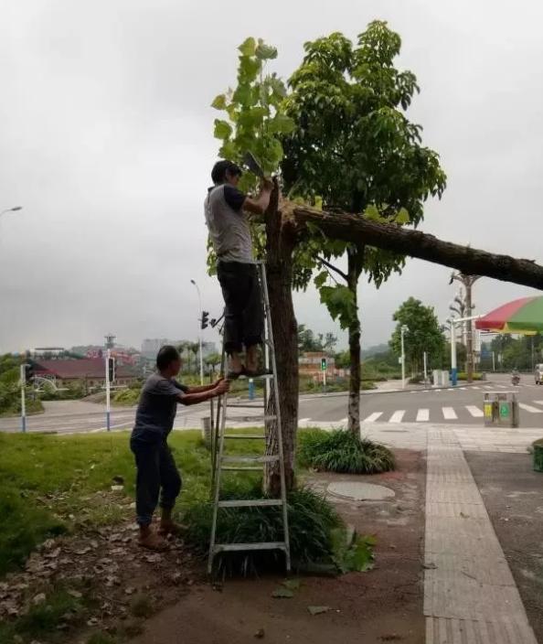 泸州园林工程